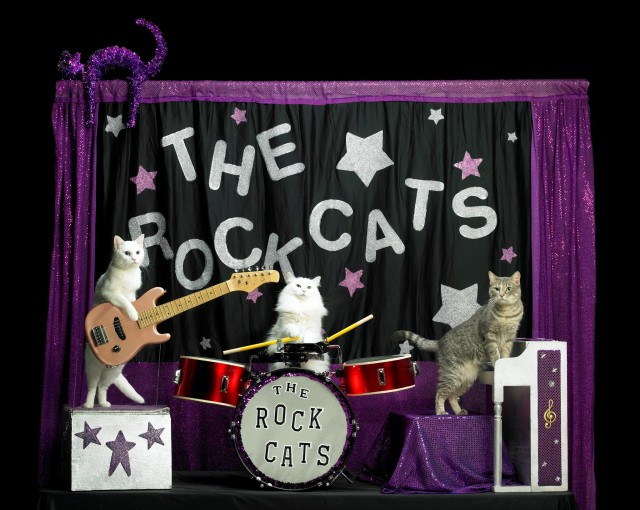 An Evening with the Acro-Cats