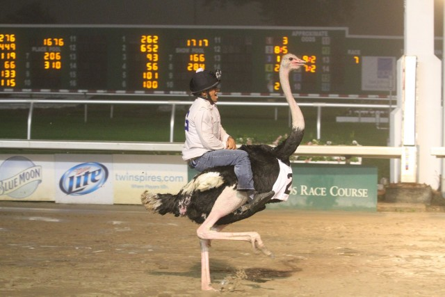 Exotic Animal Racing Returns to the Fair Grounds
