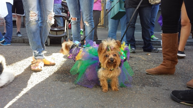 We Took Some Barkus Pictures